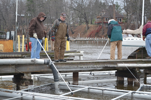 The pens will keep the fish safe from predators while the Steelhead and Chinook grow in the next month.
