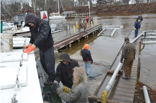 Photos by Tom Rivers Department of Environmental Conservation officials deliver Steelhead from the Altmar Hatchery this afternoon at the Oak Orchard River. The fish will spend the next month in pens by Ernst's Lake Breeze Marina.